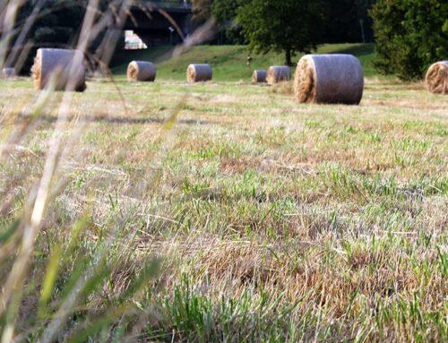 Projektsammlung für den ländlichen Raum