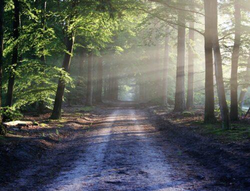 Prämie für Waldeigentümer