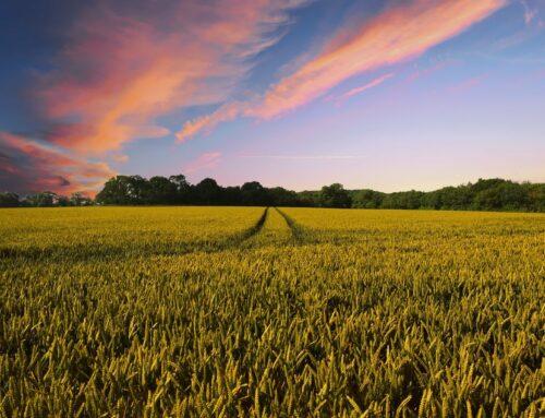 Unsere Landwirtschaft für alle / Wir geben der Landwirtschaft ein Gesicht